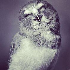 owl buho eule | Tumblr