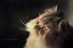 https://flic.kr/p/RmS6js | Kobe (2/2) | The Aristocats - Everybody wants to be a cat  Gracias por vuestras visitas y comentarios!! Besucos!!