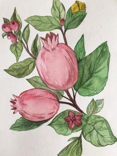 Pomegranate, watercolors