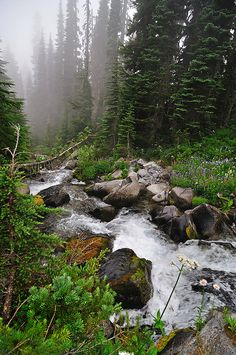 Mount Rainier - Cascading falls, evergreen trees, rocks, fog, and meadows are all commonplace in the Pacific Northwest. By Cocoa Dream on Flickr.