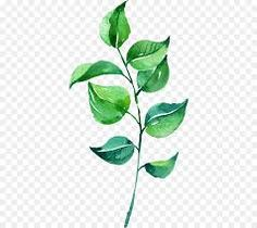 This PNG image was uploaded on February pm by user: zeeshankhan and is about Adobe Illustrator, Autumn Leaves, Branch, Encapsulated Postscript, Fall Leaves. Watercolor Paintings Nature, Watercolor Leaves, Green Leaves, Plant Leaves, Cute Owl Cartoon, Art Videos For Kids, Creative Coffee, Kids Artwork, Art Background