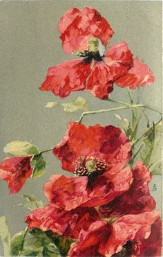 two slightly fading poppies, small bud between them, bunch of poppies below, 1907