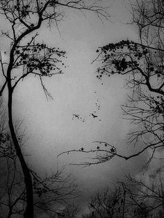 Optische Täuschung Illusion  Face in the trees