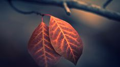 Autumn Season Leaves HD Wallpaper FullHDWpp Full HD - The Best Of Wallpaper -. - Best of Wallpapers for Andriod and ios 4k Wallpaper Iphone, Full Hd Wallpaper, Original Wallpaper, Wallpaper Backgrounds, 480x800 Wallpaper, Field Wallpaper, 1080p Wallpaper, Nature Wallpaper, Mobile Wallpaper