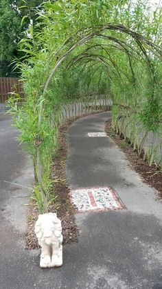 This fabulous Willow Tunnel was created by the Pond Park Primary School Eco Council. What a brilliant idea!