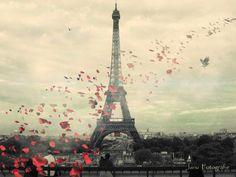 1000 pétales de rose rouge...