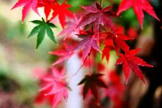 Showcase: November Autumn Autumn Colors Autumn Leaves Colors Nature Mirrorless Red EyeEm Best Shots Nature_collection Snapshots Of Life Suburbia Shrine EyeEm Best Edits EyeEm Nature Lover November Sony Sony NEX
