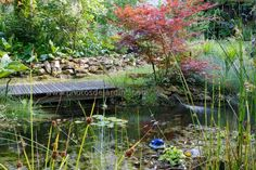 Site de Thomas Dupaigne, photographe passionné par l'univers du jardin et chasseurs de belles lumières.