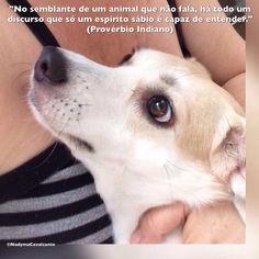 """""""No semblante de um animal que não fala, há todo um discurso que só um espírito sábio é capaz de entender."""" (Provérbio Indiano)"""