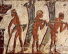 Hombres recolectando papiros para construir una barca