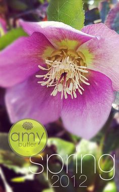i love amy butler,her fabrics are gorgeous and she has free patterns and projects!!!