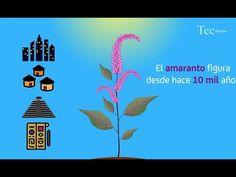 México Tierra de Amaranto, proyecto social que 'nutre'.