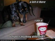 Reminds me of my dog! My sweet little Shadow!
