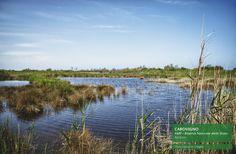 La Riserva naturale statale di Torre Guaceto è un'area protetta terrestre e marina situata sulla costa adriatica dell'alto Salento, a pochi chilometri dai centri di Carovigno e San Vito dei Normanni che si estende per circa 1.200 m, presentando un fronte marino che si sviluppa per 8.000 m.