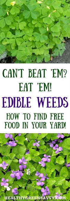You Can Eat ~ How to Find Edible Weeds in Your Yard Is your yard overrun by dandelions? Don't despair. Enjoy the free…Is your yard overrun by dandelions? Don't despair. Enjoy the free…