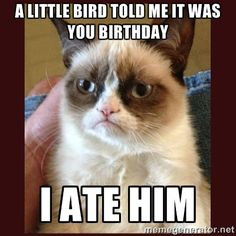 Happy Birthday Cat Meme
