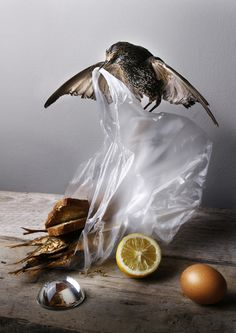 Banquet Still Life Series by Louise te Poele