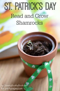 Growing Green Shamrocks for St. Patrick's Day in Preschool and Kindergarten. Read the book then plant shamrocks for an educational and fun extension activity!