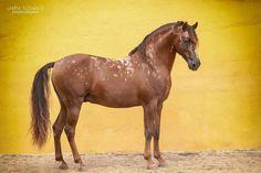 Sandra Reitenbach Photography / Sandragrafie | HORSES