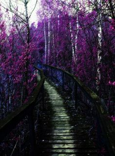 {Forest} Purple forest walkway #forest