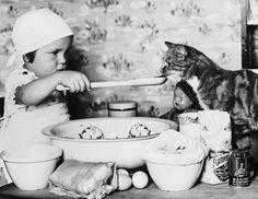 Los animales de la semana: gatos vintage http://www.huffingtonpost.es/2012/07/22/gatos-vintage_n_1689752.html?utm_hp_ref=es-ciencia-y-tecnologia#