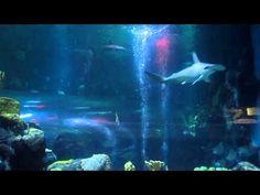 Hammerhead Sharks and tropical fish