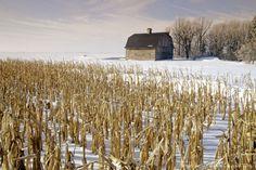 Old Barn and Corn Field in Winter, near Oakbank, Manitoba