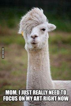 Unemployed lama