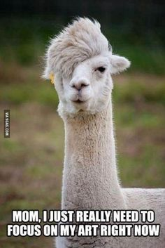 Unemployed llama
