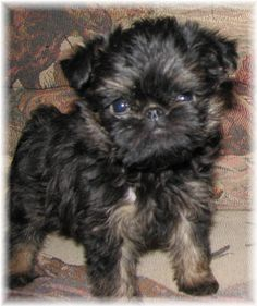 Looks alot like my Roz when she was a puppy!