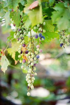 Vineyard  TRAVEL/ ADVENTURE