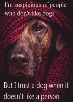 I'm suspicious of people who don't like dogs.  But I trust a dog when it doesn't like a person.