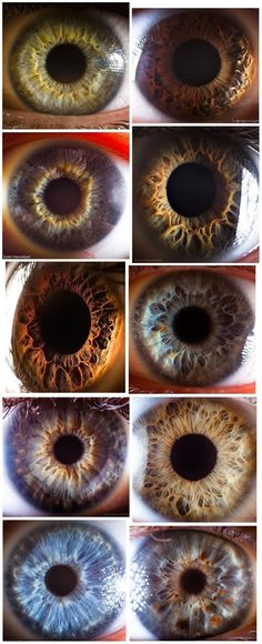 the human eye, just has to be crated by a Creator
