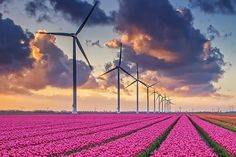 Wind Power Blows Away Coal and Gas as Europe's Cheapest Energy Source | TakePart