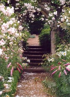 Pretty white flower entrance to a pretty home. Watch your step..........