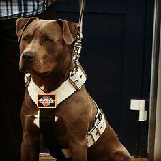harnas #extremedoggear Grijs