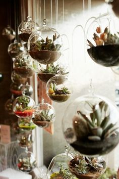 Glassy: 21 Genius Terrarium Hacks Succulents are easier than air plants, and prettier. I want to hang these in my living room.Succulents are easier than air plants, and prettier. I want to hang these in my living room.