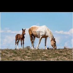 Join me for a Wild Horse Adventure  http://ift.tt/2eWB37D  http://ift.tt/RWRUZt  http://ift.tt/1VlUBxV  http://ift.tt/2efCmy2  http://ift.tt/1QUSTTG  #horse #Horses #Wildhorse #Horsetour #Worseworkshop #HorseAdventure #Utah #utahphotographer