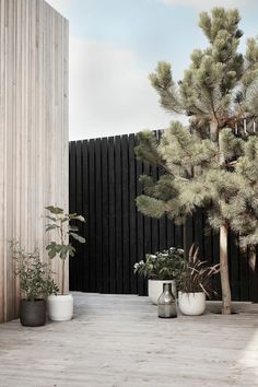 Minimalist garden with large potted plants and black fences. Minimalist garden with large potted plants and black fences. Minimalist Garden, Minimalist Design, Black Fence, White Fence, Green Street, Backyard Fences, Black Garden Fence, Outdoor Living, Outdoor Decor