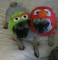 Petsmart elmo and oscar the grouch dog costumes review