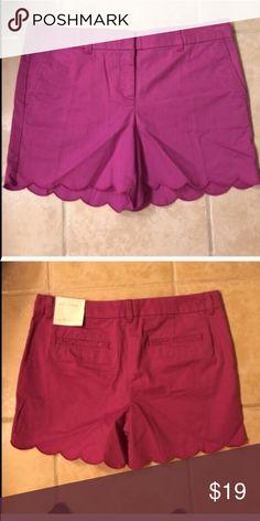 NWT size 8 Loft shorts purple NWT size 8 Loft shorts purple LOFT Shorts