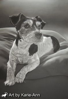 Charcoal dog portrait of a jack russell