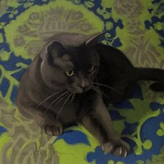 Reach doe eyed cat on blue green pattern painting, painting by artist Diane Hoeptner