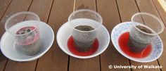 STUDENT ACTIVITY - Water and nutrient leaching - In this activity, students demonstrate how substances are dissolved and transported by water through the soil. Teaching Science, Science Experiments, Kitchen Science, Students, How To Apply, Activities, Education, Learning, Rivers