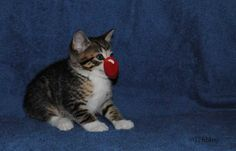 ~Tails from the Foster Kittens~: The Kittens have fun with #RedNoseDay #RedNoseSelfie