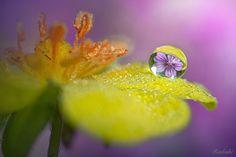 Rugiada e fiori by Roberto Aldrovandi on 500px