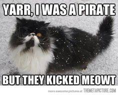 Pirate kitty…