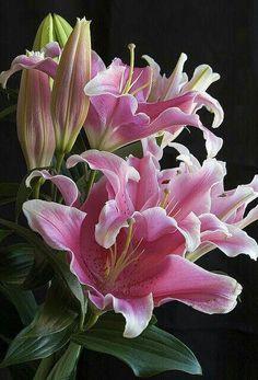 8 Flower Landscape Ideas For Your Garden – Garden Ideas 101 All Flowers, Exotic Flowers, Amazing Flowers, Beautiful Flowers, Oriental Lily, Flower Landscape, Arte Floral, Flower Pictures, Flower Wallpaper