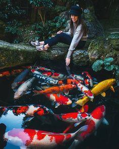 gorgeous kohaku (��� Koi Fish Pond, Fish Ponds, Koi Fish Colors, Koi Pond Design, Garden Line, Japanese Koi, Japanese Gardens, Koi Art, Carpe Koi