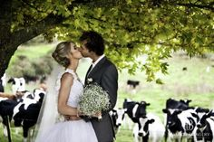 Classic Kiwi wedding at Treetops Lodge & Estate, Horohoro, Rotorua, New Zealand...such a cute picture with the cows looking on in the background - A true Kiwi Classic :-)